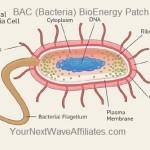 BAC (Bacteria) BioEnergy Patch