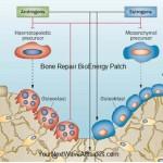 Bone Repair BioEnergy Patch